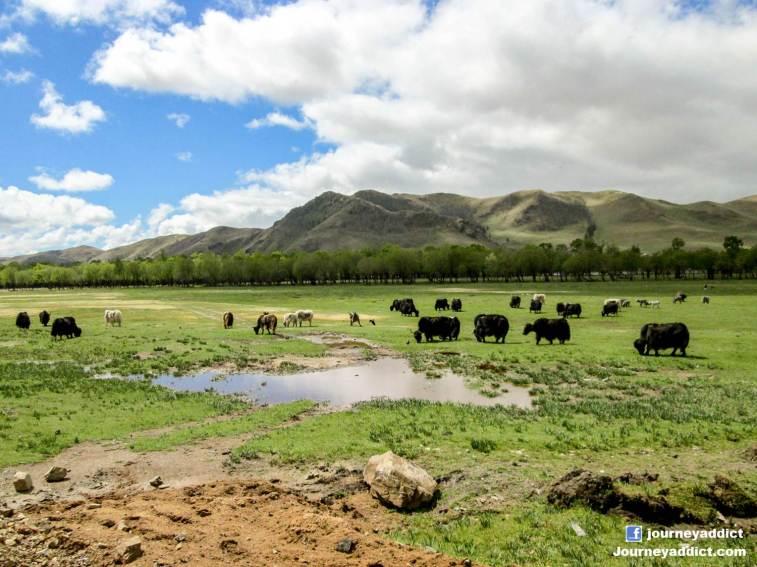 Mongolia1_r