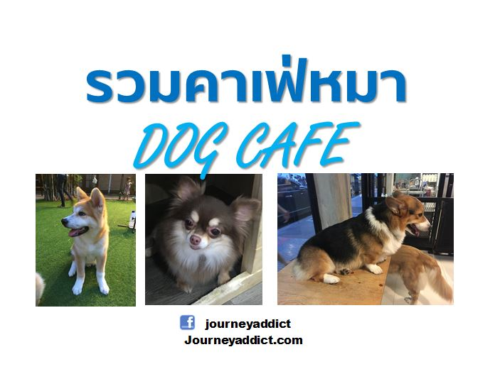 CaptureDogcafe