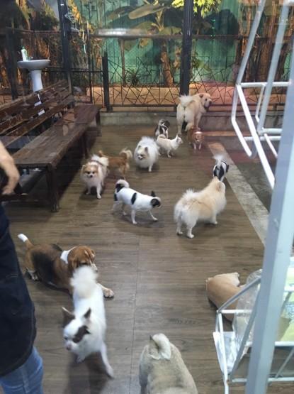 Dog Country Café_๑๙๐๑๐๗_0174.jpg