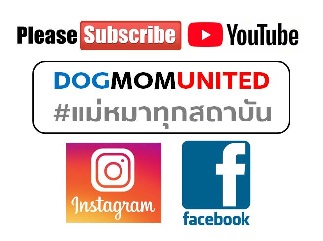 dogmomunited subscribe.JPG