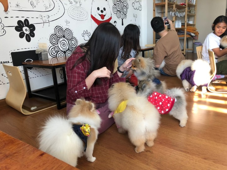 Happy Pom Dog Café_๒๐๐๑๑๖_0090