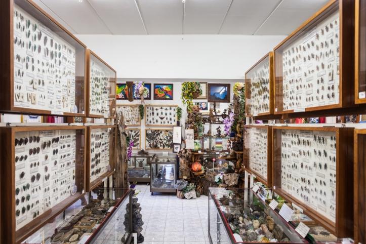 พิพิธภัณฑ์แมลงโลก.jpg